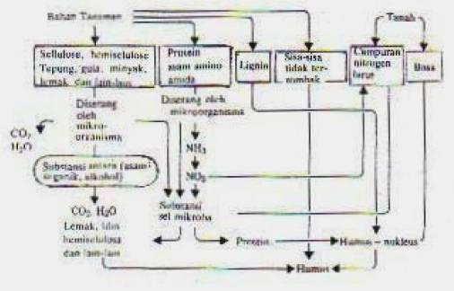 Gambar 1. Mekanisme pembentukan humus.